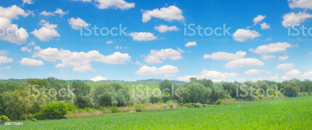 Green field and blue sky with light clouds. Agricultural landscape. Wide photo. stock photo