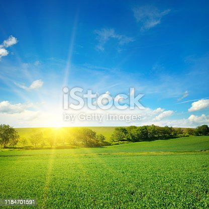 Green field and blue sky with light clouds. Bright sunrise over the horizon.