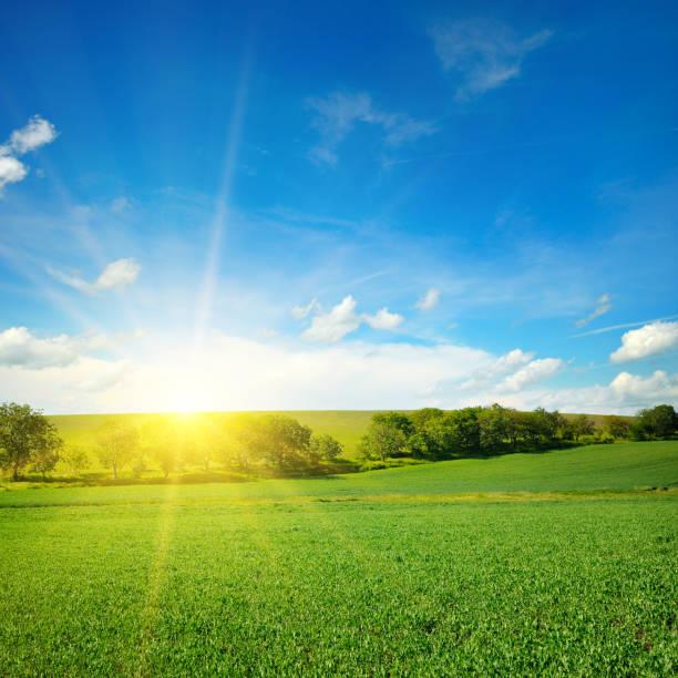 Grünes Feld und blauer Himmel mit leichten Wolken. – Foto