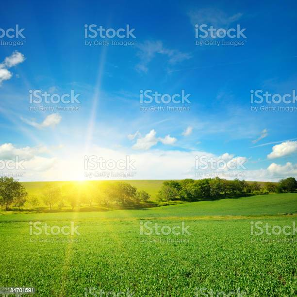 Photo of Green field and blue sky with light clouds.