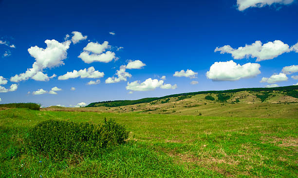 Grünen Feld und blauer Himmel mit hellen Wolken – Foto