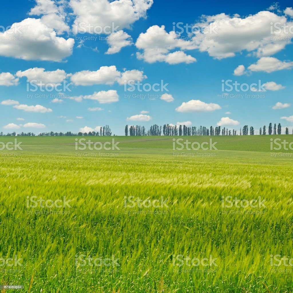 green field and blue sky with light clouds royalty-free stock photo