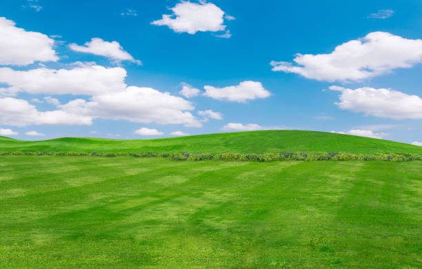 green field and blue sky with light clouds,Image of green grass field and bright blue sky. stock photo