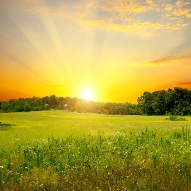 Grünes Feld und heller Sonnenuntergang. Ländliche Landschaft. – Foto