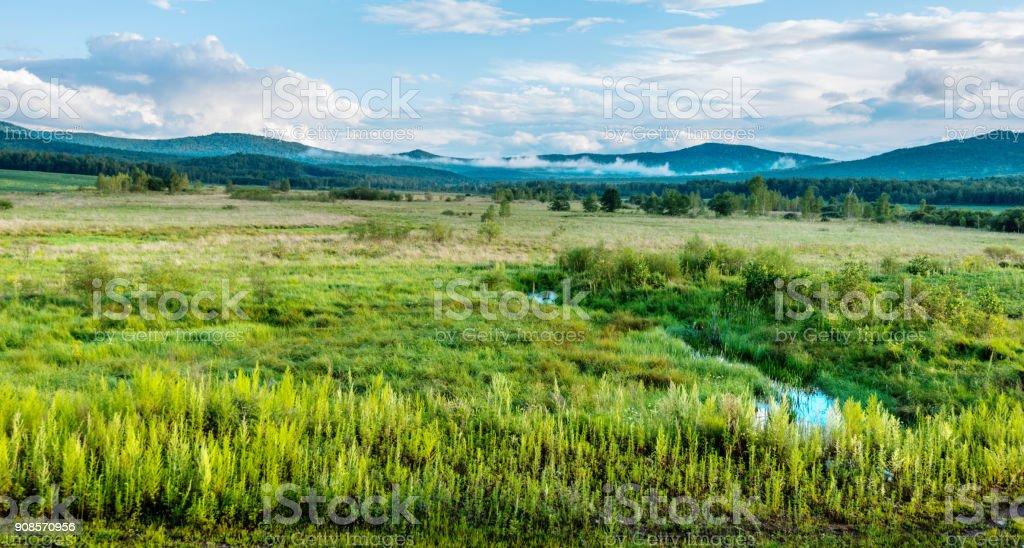 Grünen Feld und clear sky – Foto