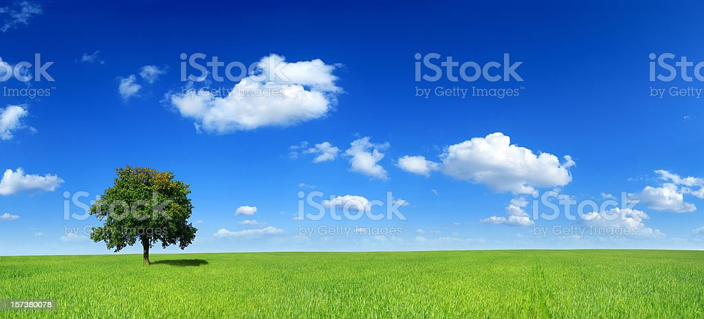 Green field and lonely tree - Landscape - Royalty-free Agricultural Field Stock Photo