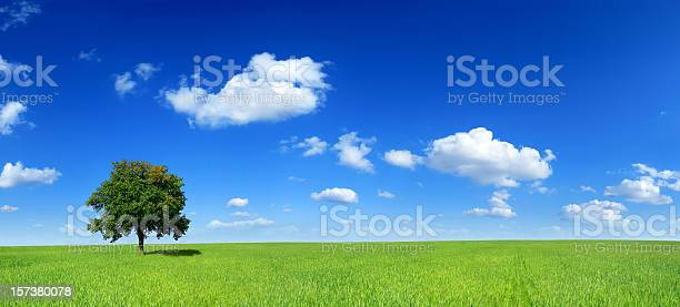 Green Field And Lonely Tree Landscape Stock Photo - Download Image Now