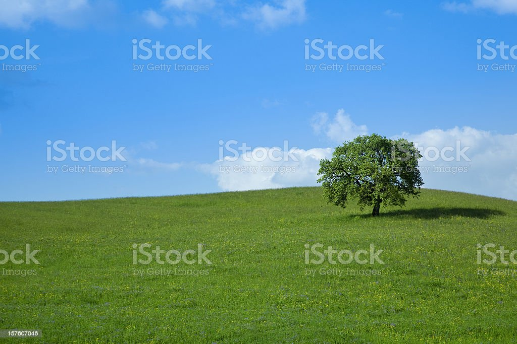 green field and lonely tree landscape royalty-free stock photo