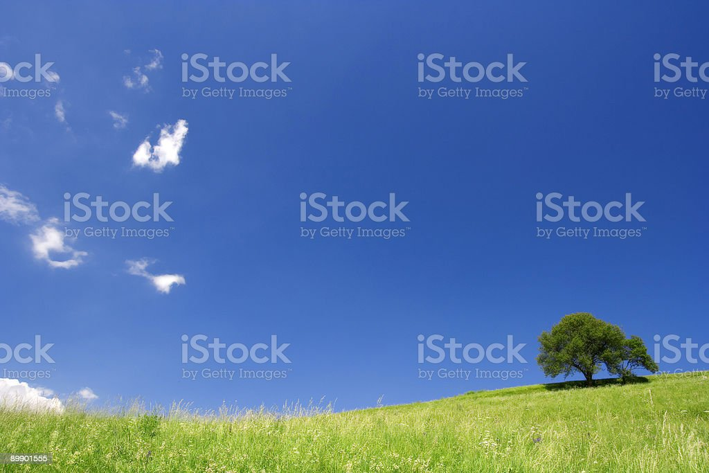 Green Field and Lonely Tree - Siusi, Dolomiti, Italian Alps royalty free stockfoto