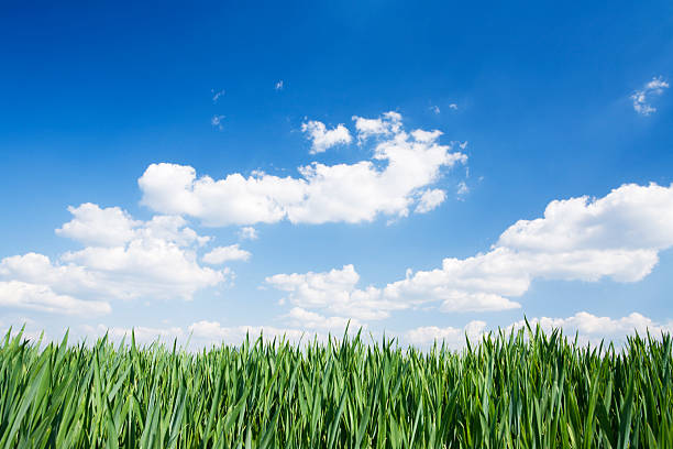 green field and sky stock photo