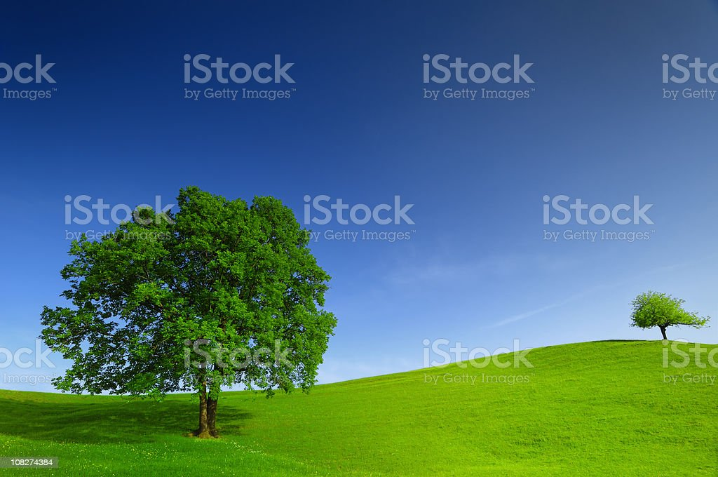 Green field and tree landscape royalty-free stock photo