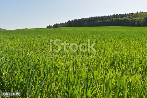 Green field at the edge of the forest