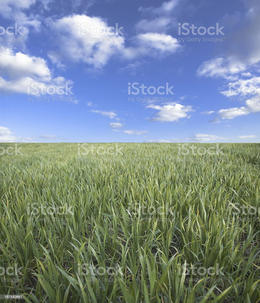 Green Field Below Blue Sky royalty-free stock photo