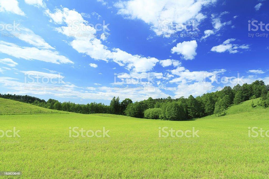 Green Field, Blue Sky  - Summer Landscape royalty-free stock photo
