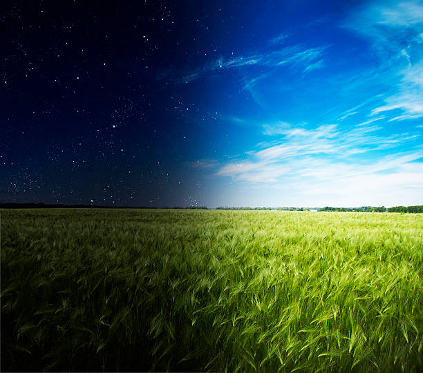 Green field in day and night. stock photo