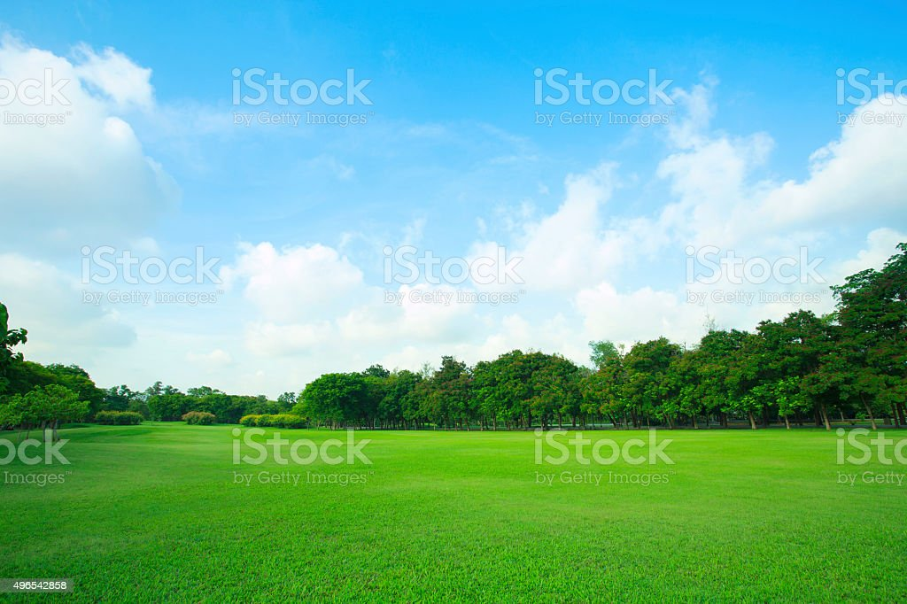 green field in public park stock photo