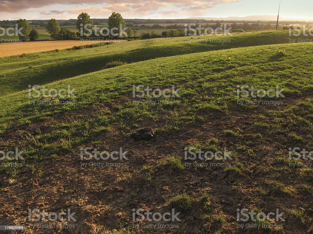 Green field in the evening sun royalty-free stock photo