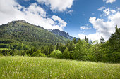 A beautiful alpine field in southern Germany. Grass in the foreground with distant woods and summit. Landscape.