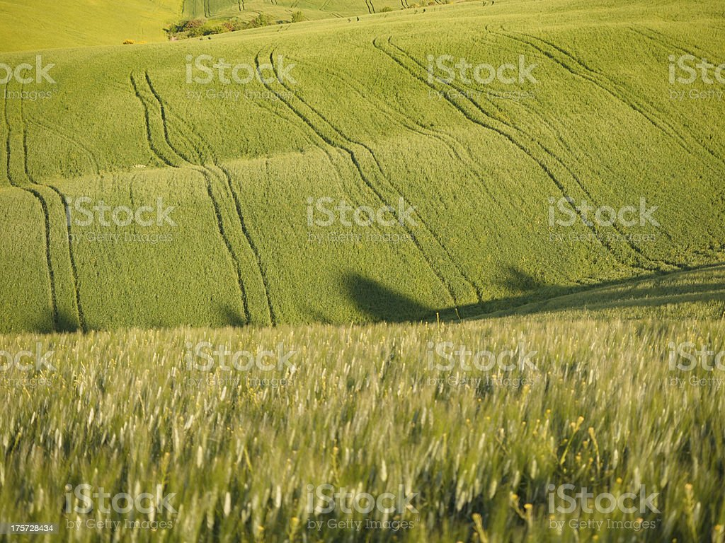 Green field in Tuscan landscape at sunset royalty-free stock photo