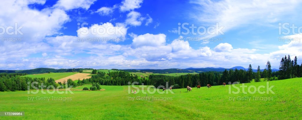 Green field Landscape - panorama royalty-free stock photo