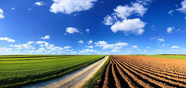 Green field Landscape stock photo