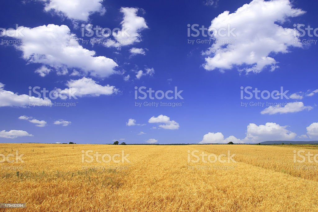 Green field - Landscape SCROLL DOWN for more XXXL Green Field Landscape photos :) Agricultural Field Stock Photo