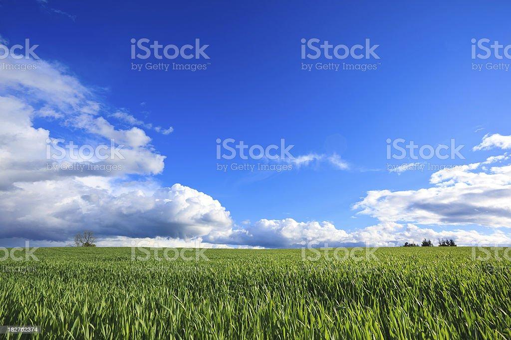Green Field Landscape royalty-free stock photo