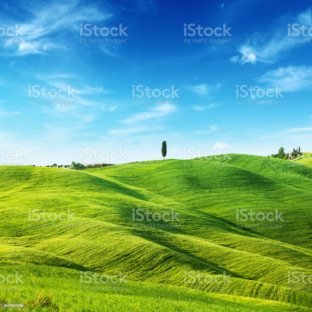 Green Field Landscape - Spring in Tuscany Green Field Landscape - Spring in Tuscany Agricultural Field Stock Photo