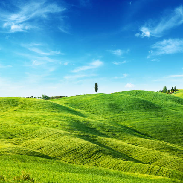 Green Field Landscape - Spring in Tuscany stock photo