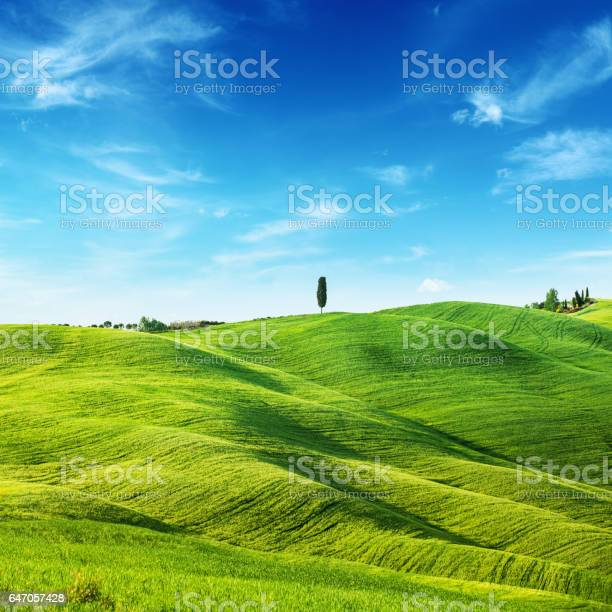Green Field Landscape Spring In Tuscany Stock Photo - Download Image Now