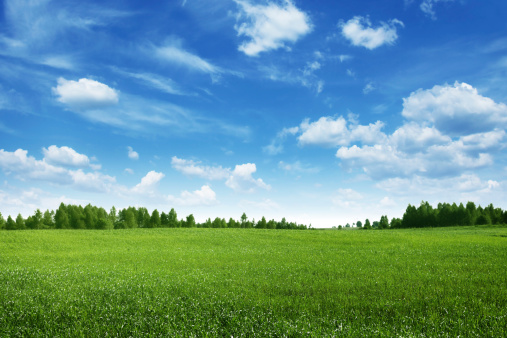 Green field lined by trees on clear day