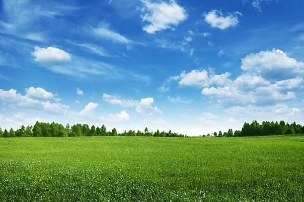green field lined by trees on clear day - field stock photos and pictures
