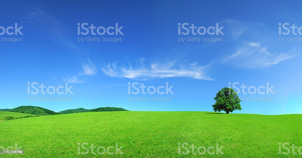 Green field nature Landscape - Grass Tree and Sky royalty-free stock photo