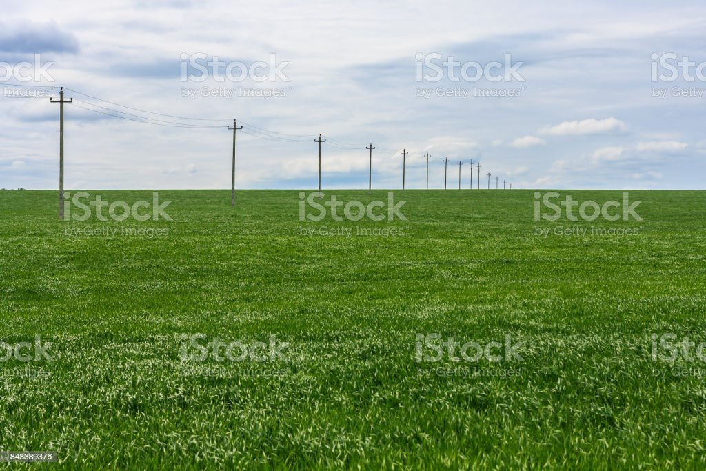 Green Field Of Young Wheat Poles With Electrical Wires Into The