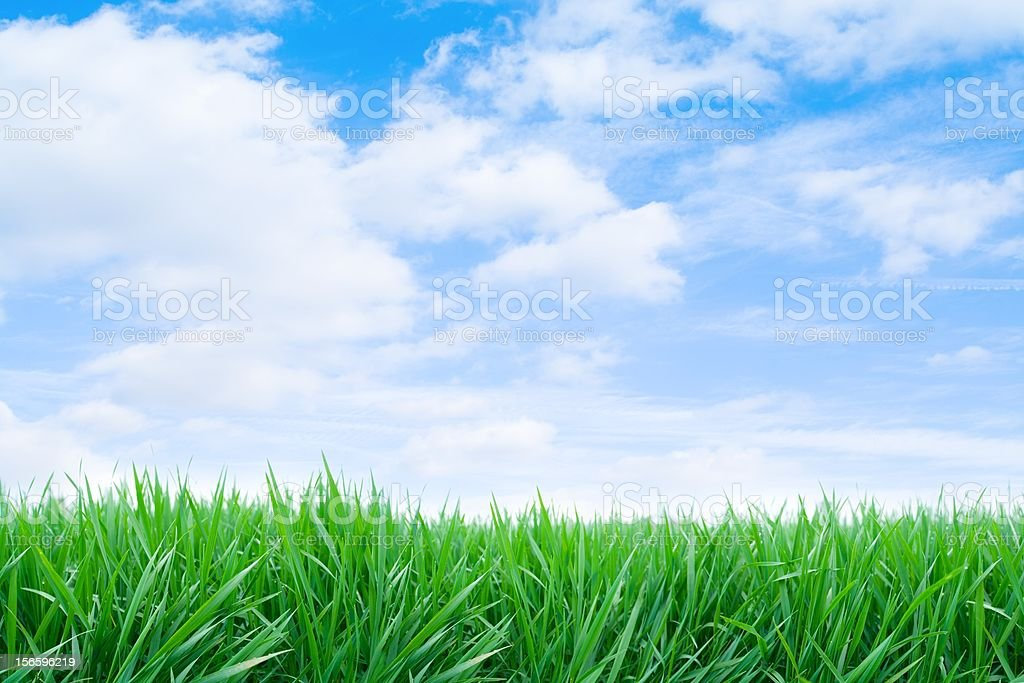 A green field on a clear sunny day - Royalty-free Agricultural Field Stock Photo