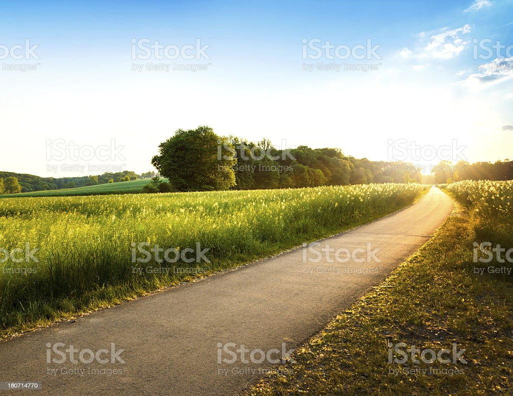 Green field on a sunny day stock photo