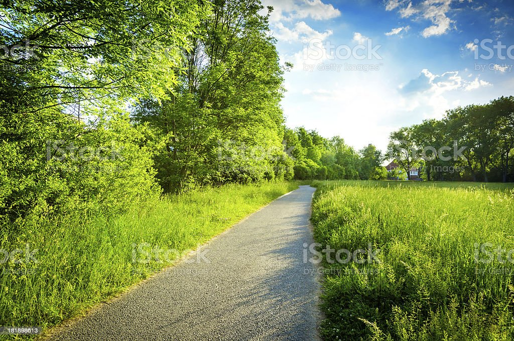 Green field on a sunny day royalty-free stock photo
