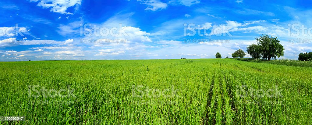 Green field panorama stock photo