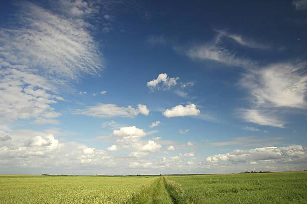 green Feld – Foto