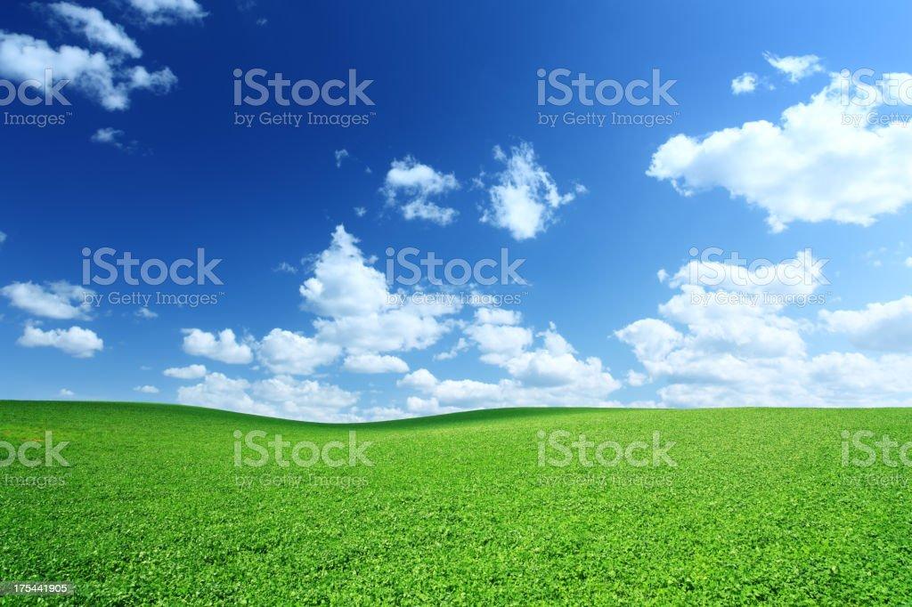 Green Field royalty-free stock photo