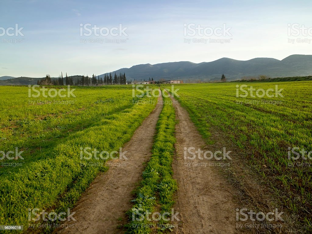 Green field - Royalty-free Agricultural Field Stock Photo