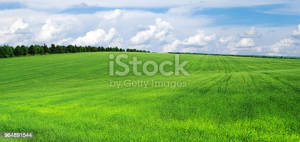 Green Field Stock Photo & More Pictures of Agriculture
