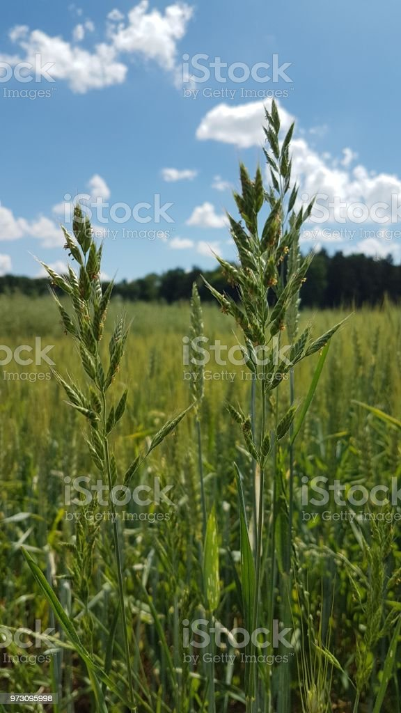 A green field stock photo