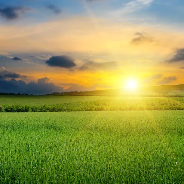 Grünes Feld, Sonnenaufgang und blauer Himmel. Landwirtschaftliche Landschaft. – Foto