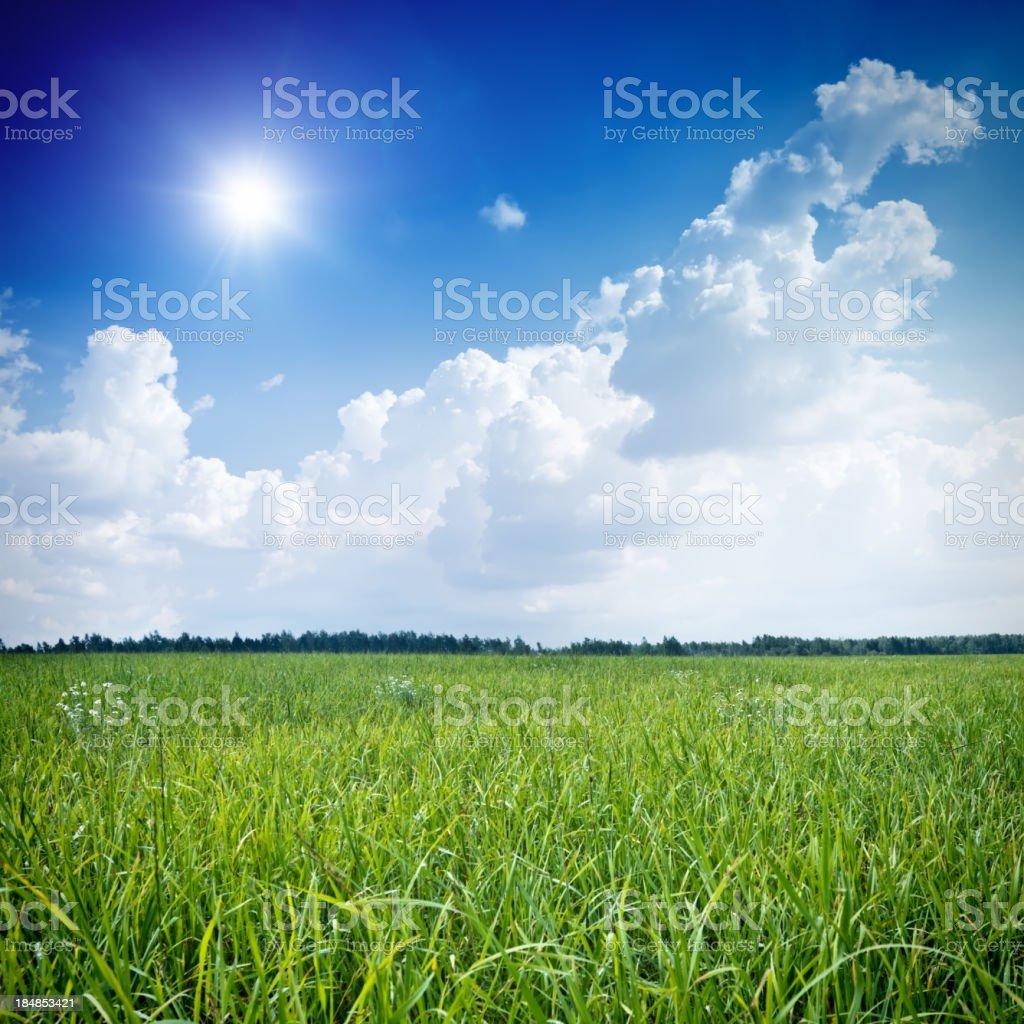 Green field under blue sky royalty-free stock photo