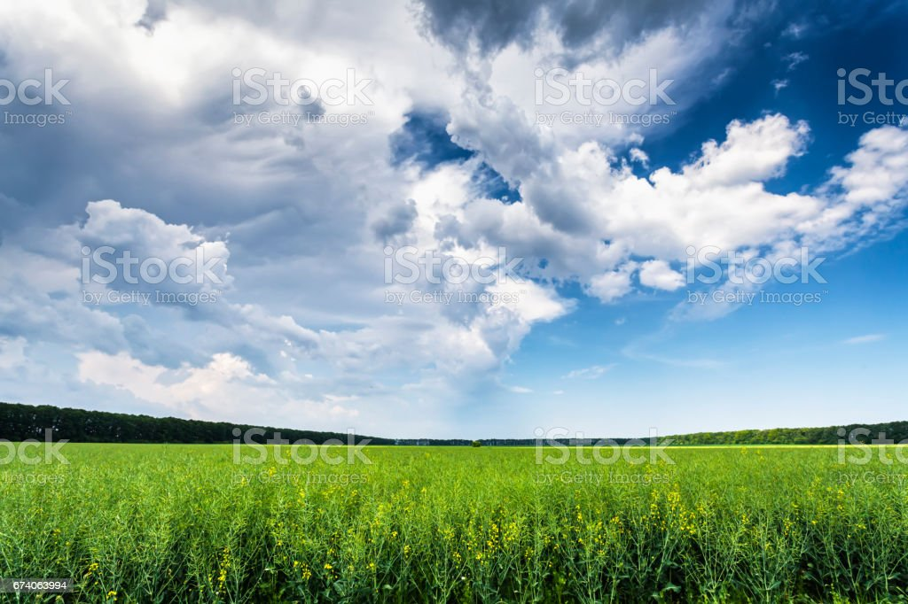 Green Field Under Blue Sky royalty-free stock photo