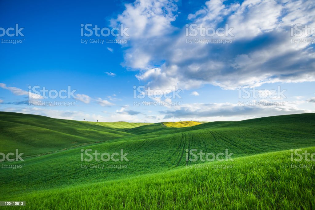 Green Field Weat royalty-free stock photo