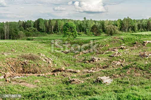 green field with a ravine and cut down trees and shrubs, clearing unnecessary vegetation, harvesting timber in the spring