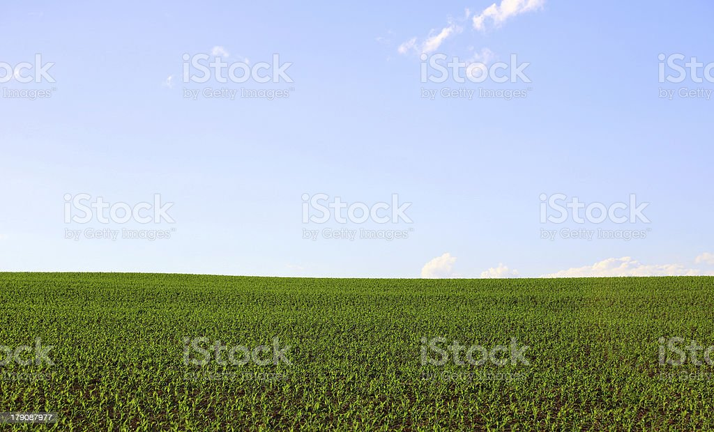 Green field with blue sky landscape royalty-free stock photo