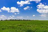 Green field with clouds in the blue sky